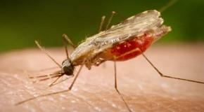 فحص جديد لتشخيص مرض الملاريا